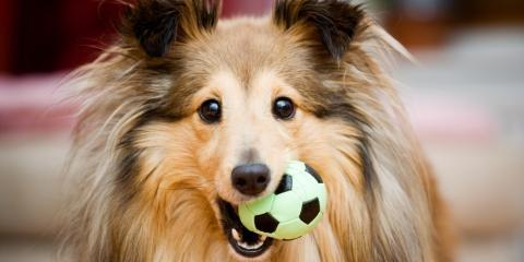 3 Dollar Tree Toys Your Dog Will Love, Kendale Lakes-Tamiami, Florida