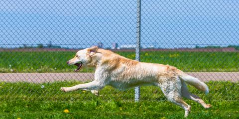 The Top 3 Reasons to Consider a Dog Run Fence, Anchorage, Alaska