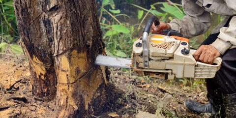 The Do's & Don'ts to Follow After Spotting Diseased Trees, Cincinnati, Ohio