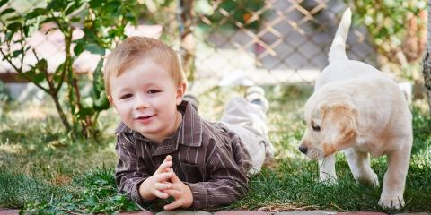 3 Ways to Make an Outdoor Dog Kennel Comfortable in Summer, Anchorage, Alaska
