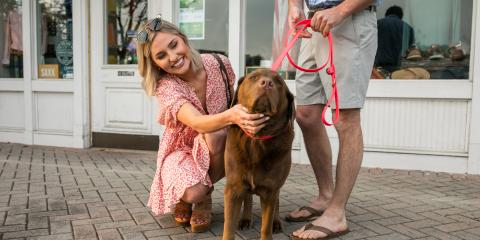 How to Get Your Dog Used to a Collar, Jacksonville East, Florida
