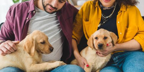 4 Ways to Prevent Separation Anxiety in Dogs, Churchville, New York