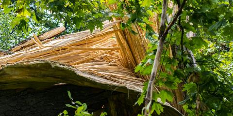 The Top 3 Emergency Tree Removal Tips, Midway, Georgia