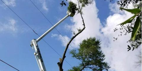 What to Do About Tree Branches Near Power Lines, Midland City, Alabama