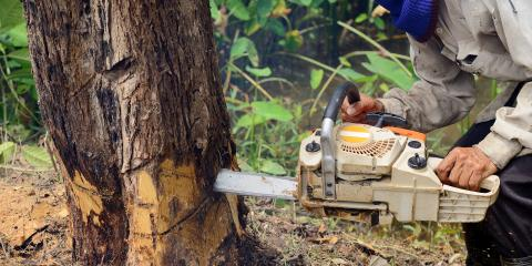 Your Guide to Tree Health, Ewa, Hawaii