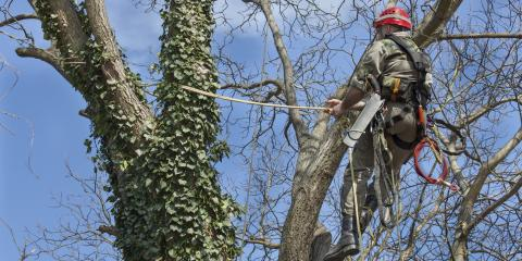 What Is Tree Cabling & Why Is It Done?, Cookeville, Tennessee