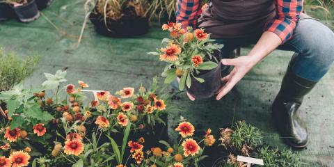 Your Guide to Annual vs. Perennial Flowers, Center City, Minnesota