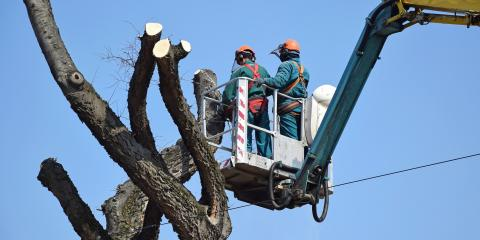 3 Reasons to Remove the Dead Tree From Your Yard, Wharton, New Jersey