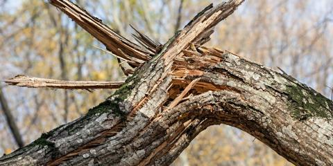 5 Reasons to Invest in Dead Tree Removal, South Twiggs, Georgia