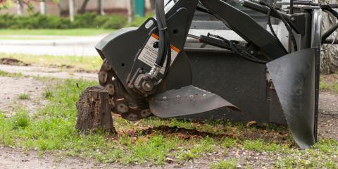 3 Reasons to Get Rid of Tree Stumps, Hawaii County, Hawaii
