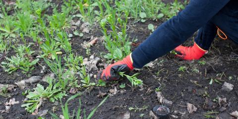 3 Natural Weed Killing Remedies & Methods, Hilo, Hawaii