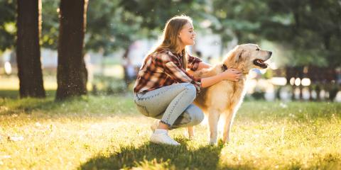 3 Ways to Get Your Dog to Come Back When You Call, Milford, Connecticut
