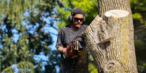 5 Signs It's Time for Tree Removal , Keener, Indiana