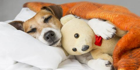 Can Dogs Get the Common Cold?, Clarksville, Maryland