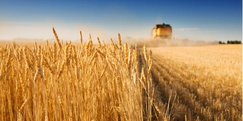 The Top 3 Ways to Avoid Accidents During Harvest Season, Sibley, Iowa
