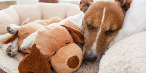 How to Keep Pets Safe During Home Painting, Andover, Minnesota
