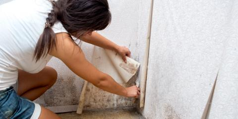 Top 5 Places to Check for Mold in Your Home , Zionsville, Indiana