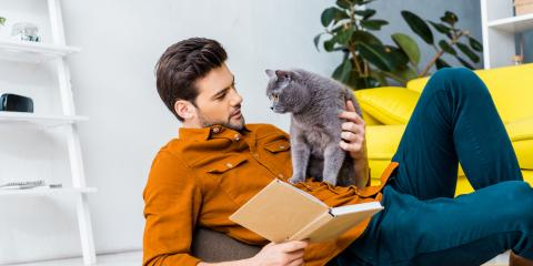 4 Ways to Help Your Cat With Separation Anxiety, Honolulu, Hawaii