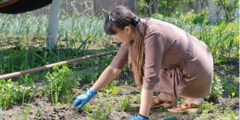 3 Ways to Fix an Overgrown Garden, Whiteville, Arkansas