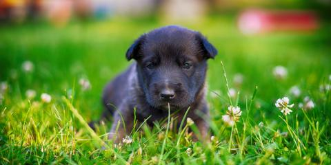 3 Summer Safety Tips For Dog Owners Robinwood Kennel